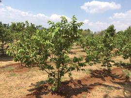 Agricultural Land in Dindigul | Agricultural Land for Sale