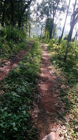 Cheap Agricultural Land in Pathanamthitta | Cheap